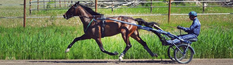 häst4